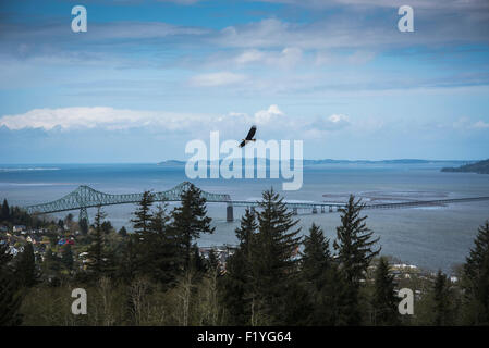 Bridge,Flying,Oregon,Bald Eagle,Astoria - Stock Photo