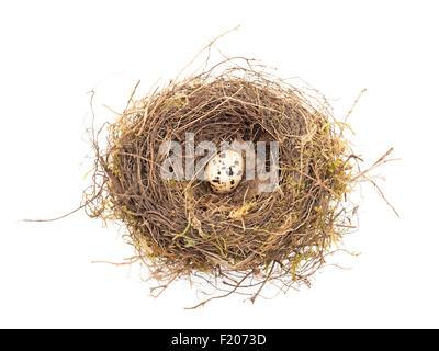 Nest mit Wachteleiern - Stock Photo