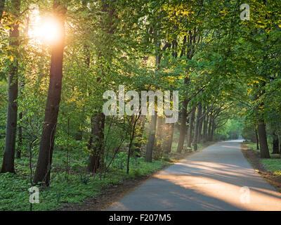 Weg im Park im Gegenlicht - Stock Photo