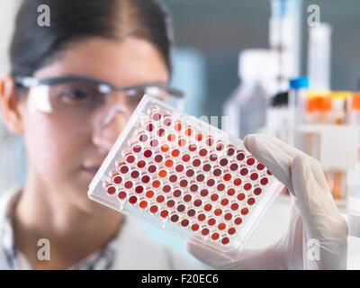 Close up of female scientist examining micro plate blood samples in laboratory - Stock Photo