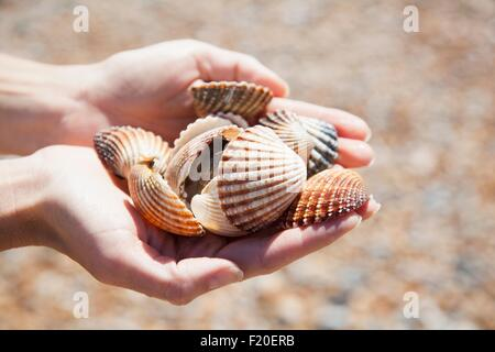 Close up of womans cupped hands holding collection of seashells - Stock Photo