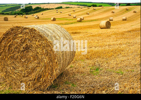 STRAW BALES IN FIELD IN DEVON UK - Stock Photo