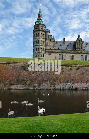 Swans and a cormorant in the moat and Kronborg Castle in the background - Stock Photo