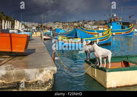 Malta, Marsaxlokk, dogs in a traditional fishing boat in a fishing port - Stock Photo
