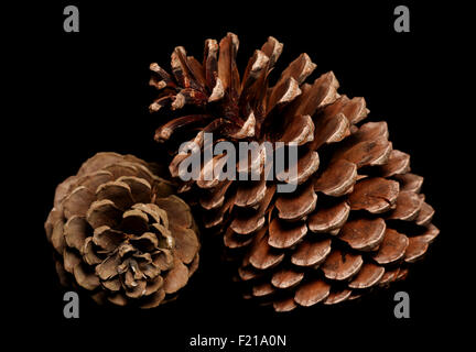 two pine cones on black background - Stock Photo