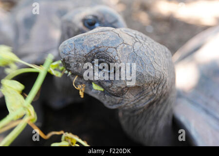 Turtles in national park on island La Digue, Seychelles - Stock Photo