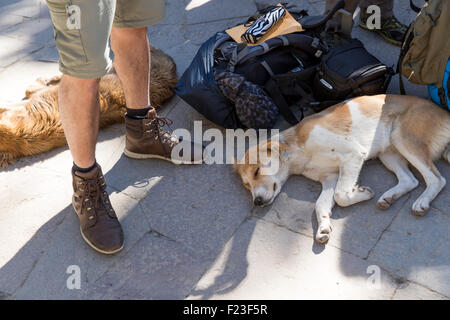 Peru, Morning sun lights dogs sleeping in morning sun by backpacker's boots and pack outside entrance to Machu Picchu - Stock Photo