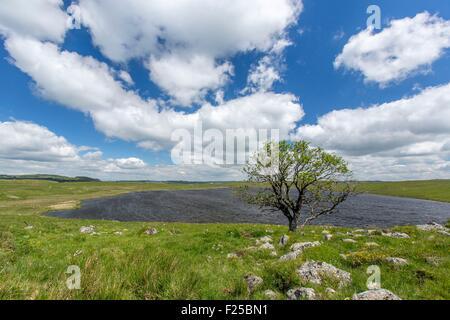 France, Lozere, Aubrac, Lake St Andeol on the way to Saint Jacques de Compostela - Stock Photo