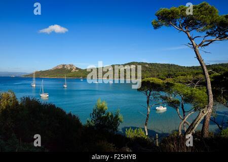 France, Var, Iles d'Hyeres, Parc National de Port Cros (National park of Port Cros), Porquerolles island, Notre - Stock Photo
