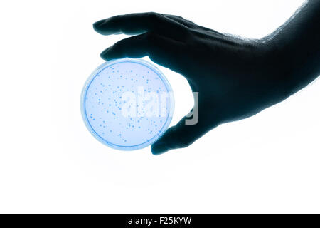 Image of a hand holding a Petri dish - Stock Photo