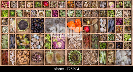Collection of dried flower seed pods and seeds from the garden - Stock Photo