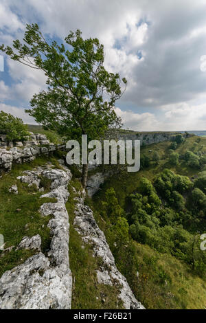 Malham Cove tree - Stock Photo