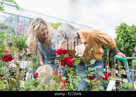 Mature couple smelling rose in plant nursery, Augsburg, Bavaria, Germany - Stock Photo