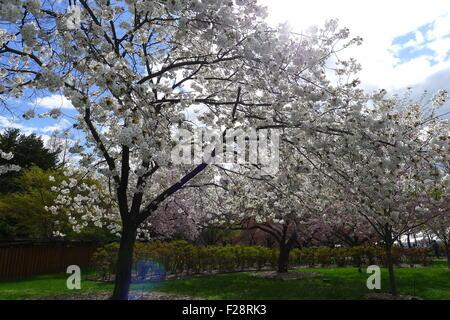 Spring Brooklyn Botanic Garden Brooklyn New York Stock Photo Royalty Free Image 31316013 Alamy