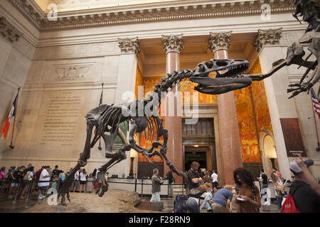 Amidst the visitors a Barosaurus protects her young from an attacking Allosaurus in the entry hall at the American - Stock Photo