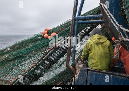 Hauling in dragger net full of haddock and dogfish.  Georges Bank, New England - Stock Photo