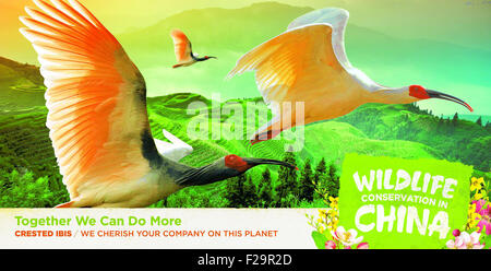 Washington, DC, USA. 15th Sep, 2015. This picture offered by Chinese Embassy shows Crested Ibis. A series of advertisements - Stock Photo