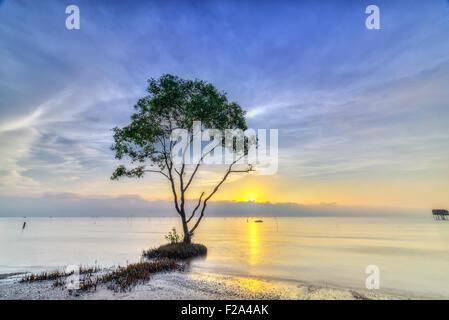 Sonneratia catch sunrise on deserted beach - Stock Photo
