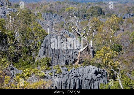 Karst limestone formation in the Tsingy de Bemaraha Strict Nature Reserve, Melaky, Madagascar, Southeast Africa - Stock Photo