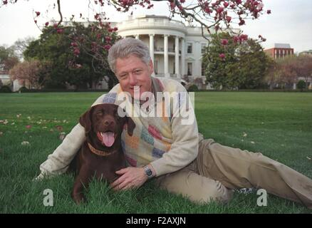 President Bill Clinton with his a male chocolate-colored Labrador Retriever, Buddy. Clinton acquired Buddy as a - Stock Photo