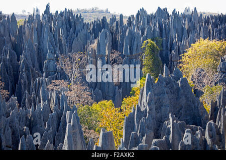 Karst limestone formation in the Tsingy de Bemaraha Strict Nature Reserve, Melaky, Madagascar, Southeast Africa - Stock Photo