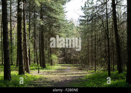 Forrest trees with path in the middle - Stock Photo