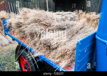 Bundles of flax on the back of a flatbed lorry. - Stock Photo