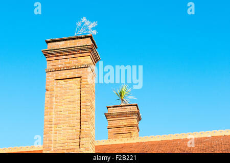 Plants growing from brick chimneys - Stock Photo