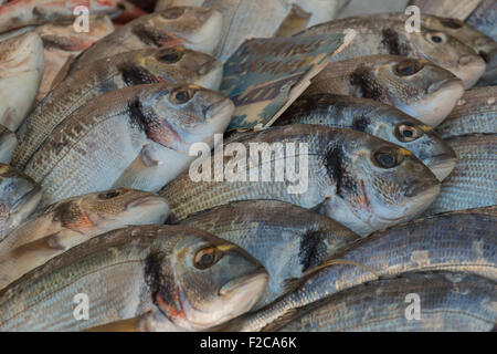 Freshly caught bream fish on display for sale at farmer's market - Stock Photo