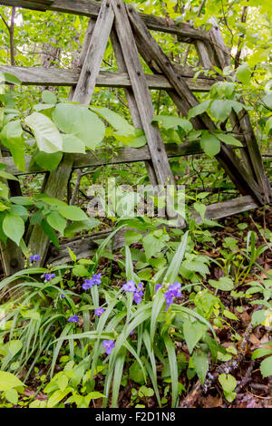 The woods grow through an old wooden gate along the Appalachian Trail just south of Shenandoah National Park - Stock Photo