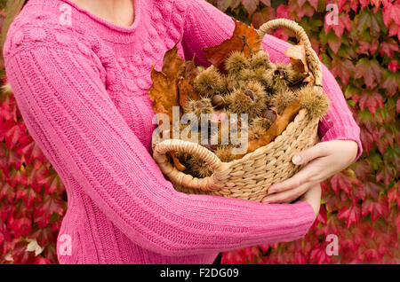 Cestnuts in the basket - Stock Photo