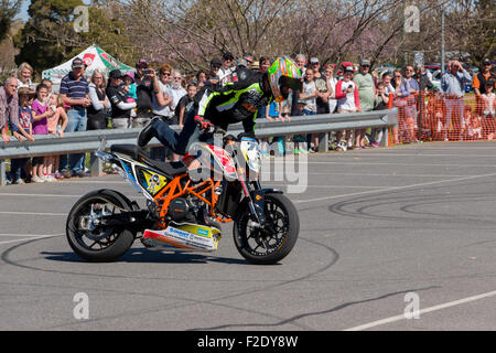 VICTORIA/AUSTRALIA - SEPTEMBER 2015: Stunt motorcycle rider performing at a local car show on the 13 September 2015 - Stock Photo