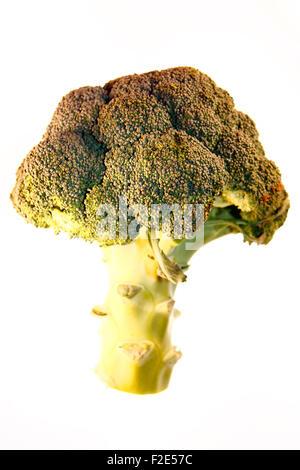 Brokkoli / broccoli - Symbolbild Nahrungsmittel . - Stock Photo