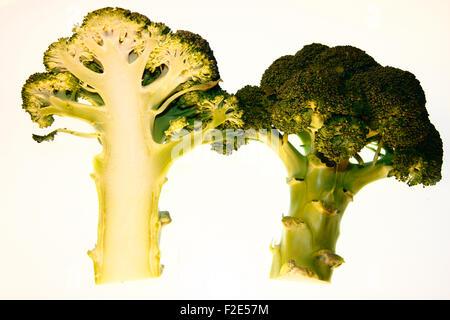Brokkoli / broccoli - Symbolbild Nahrungsmittel. - Stock Photo