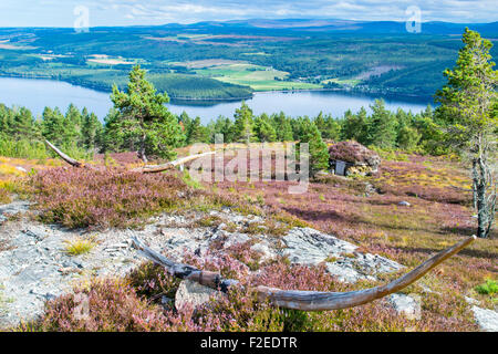ABRIACHAN TRAIL OR WALK ABOVE LOCH NESS CARVED WOODEN HORNS OVERLOOKING THE SHIELING HUT  SURROUNDED BY PURPLE HEATHER - Stock Photo