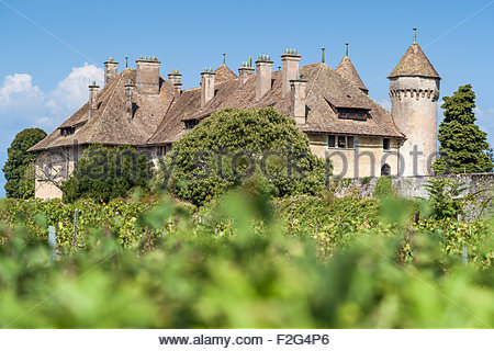 Ripaille castle and vineyard in Thonon-les-Bains (France) - Stock Photo