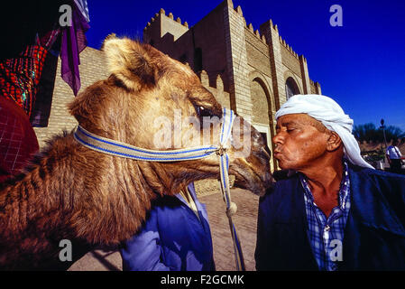 A camel handler kissing his camel outside the Great Mosque at Kairouan. Tunisia. North Africa - Stock Photo