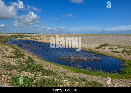 Rye harbour nature reserve. East Sussex. England. UK - Stock Photo