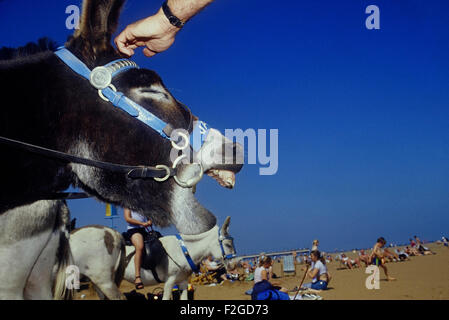 Donkey rides on Skegness beach. Lincolnshire. England. UK - Stock Photo