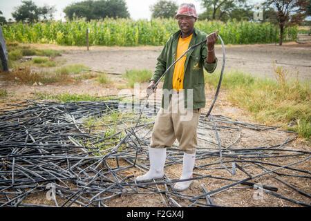 Man sorting out irrigation tubing in Ghanzi, Botswana - Stock Photo