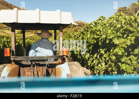 Rear view of farmer driving his tractor between rows of trellis in the vineyard during harvest season. - Stock Photo