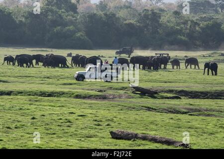 People watching a large group of wild elephants in Kaudulla National Park in Sri Lanka - Stock Photo