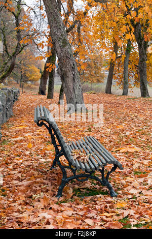 Stone Wood Bench Seats In Park Taxus Sp Yew Evergreen Hedging Stock Photo Royalty Free Image