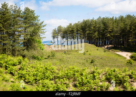 Whiteford Burrows - a stabilised dune system with conifer plantations on the north coast of Gower peninsula in South - Stock Photo