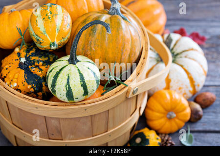 Pumpkins and variety of squash in a harvest basket - Stock Photo