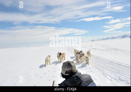 Husky sled dogs running in front of sledge with person seen from behind on sea ice, Baffin bay, Nunavut, Canada. - Stock Photo