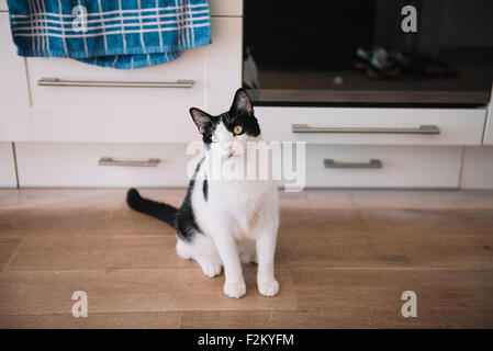 Black and white cat sitting on the kitchen floor waiting for food - Stock Photo