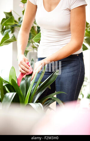 Woman wiping leaves of a plant - Stock Photo