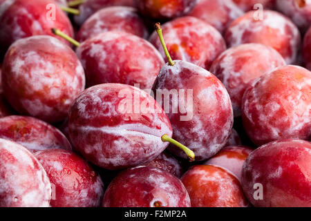 red plum closeup - Stock Photo