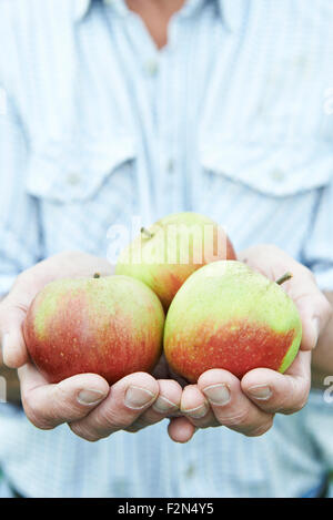 Close Up Of Man Holding Freshly Picked Apples - Stock Photo